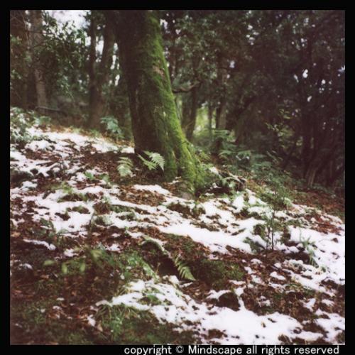 円山公園の残り雪