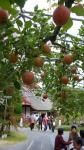 リンゴ園入り口