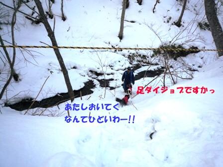 P1050282_20110201223618.jpg