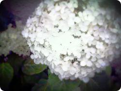 lomolike_image_20110701202032.jpg