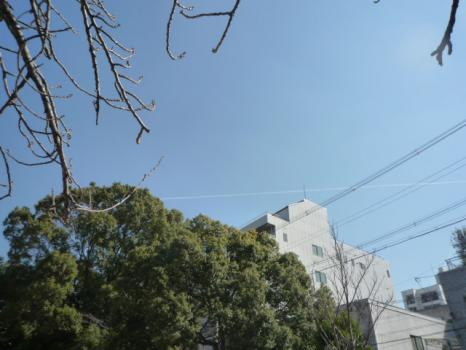 ひこうき雲P1070017