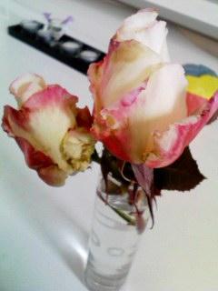 rose10jan2011.jpg