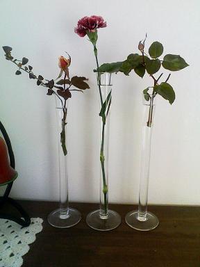roses30jan2011.jpg