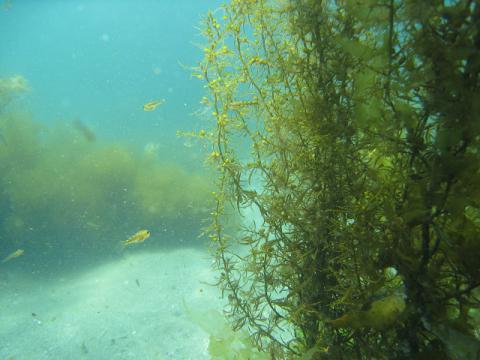 seaforest.jpg