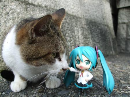 20一ノ峰のネコ