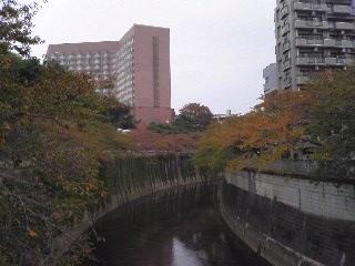 kouyou_20071112211200.jpg
