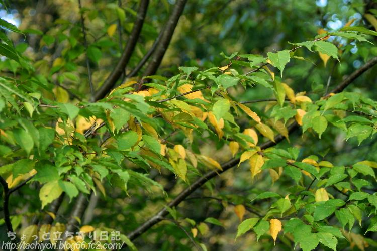 Leaf in October