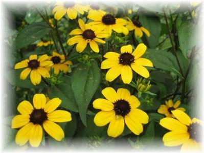 2011年7月25日黄色い花