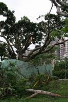 道端の倒木