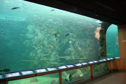 水族館だ。ん、確かに。