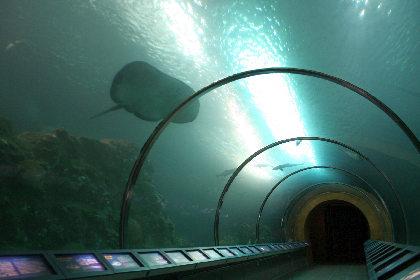 トンネルは短いけどちゃんとしてたし。