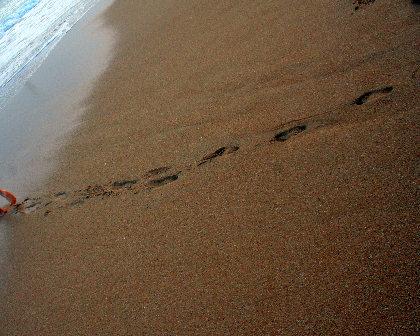 綺麗な砂浜よね。