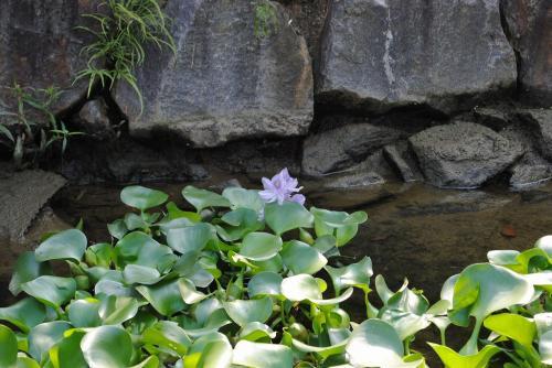 赤塚山公園5