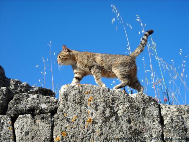 トロイの子猫