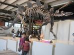 ステゴサウルスと