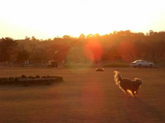 夕日の散歩 065