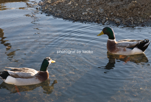 photo90.jpg