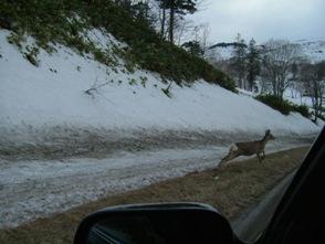 躍動感溢れる、鹿の写真(笑)