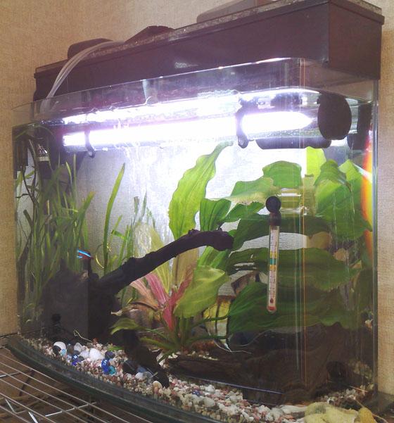 水中ライト水槽