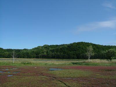 計呂地のサンゴ草群生地。