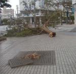 taifuu4-3.jpg