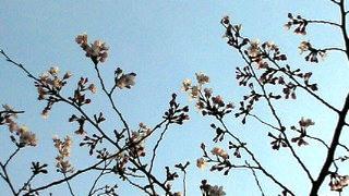 お花チラ見会 4.2