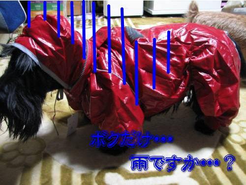 IMG_5203-1.jpg