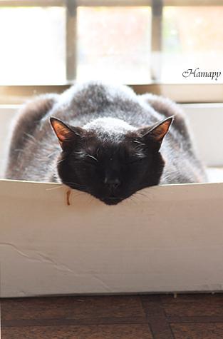 瞑想中。。。!?