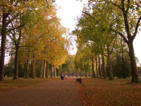 大きな並木道