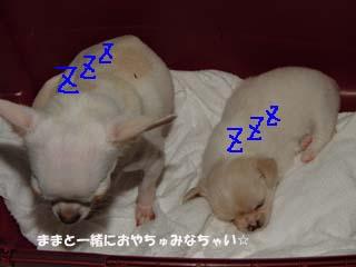 おやちゅみのコピー