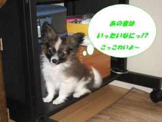 04-03_20091004185532.jpg