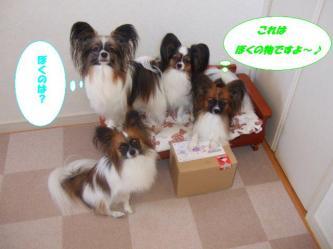 04-06_20091004185602.jpg