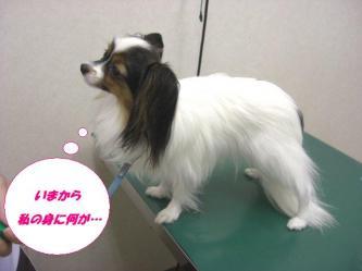 10-01_20091011095345.jpg