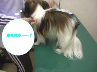 10-04_20091011095415.jpg