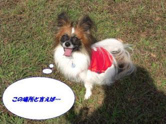 16-11_20091024194927.jpg