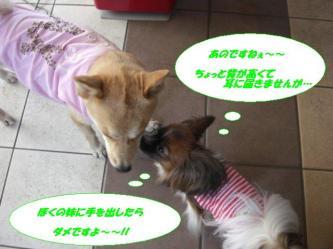 18-04_20090918204459.jpg