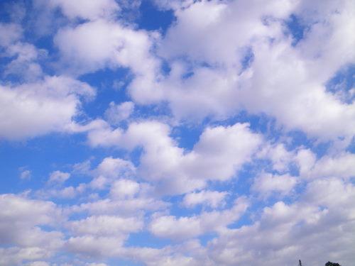 雲1130