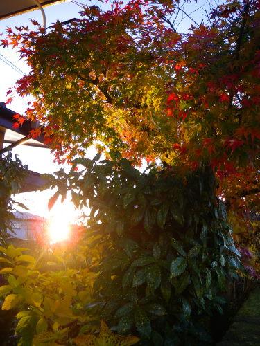 夕陽1204