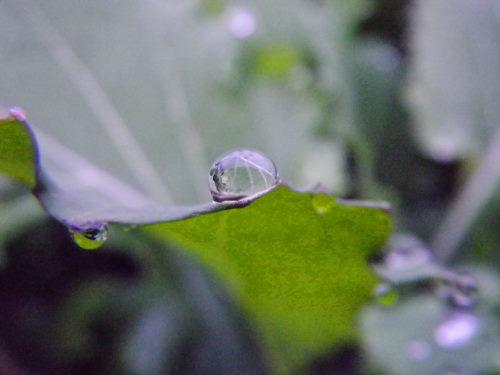 水滴1214