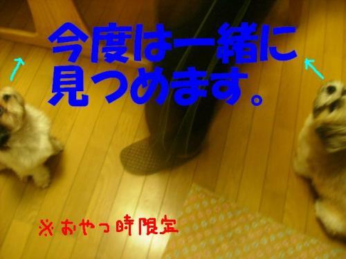 P9051442.jpg