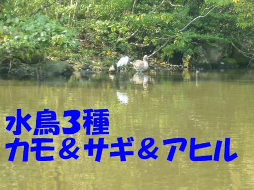 PA111461.jpg