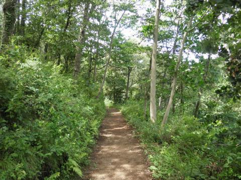 緑の周遊道82