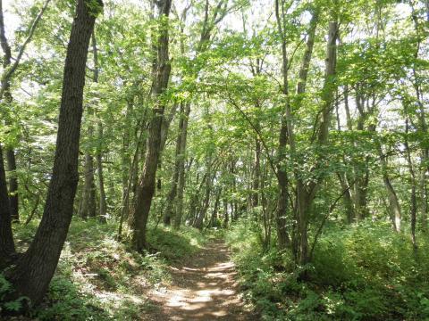 緑の林19