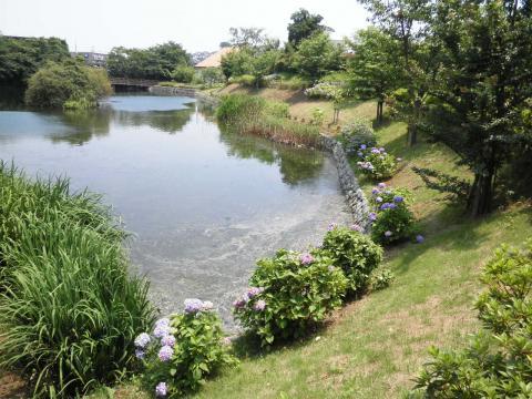 初夏の池101