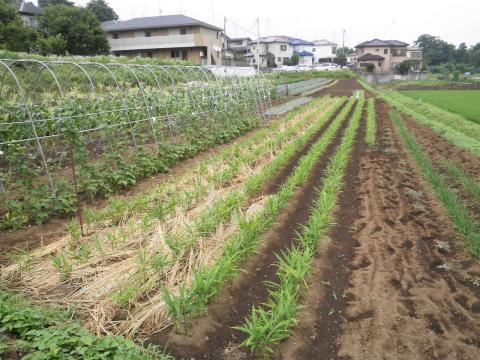 野菜畑25