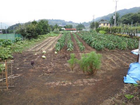 野菜畑11