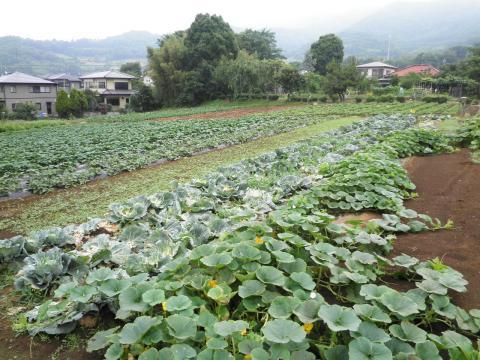 野菜畑28