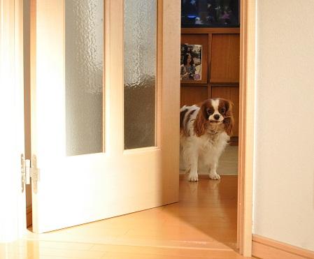 入ってこないの?