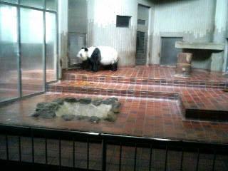上野動物園5