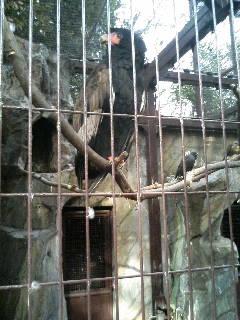 上野動物園11
